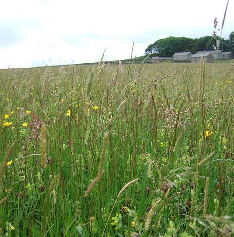 hannahs-meadow